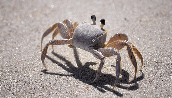 Are You Surrounded by Crabs? How a Change In Environment Impacts Our Future